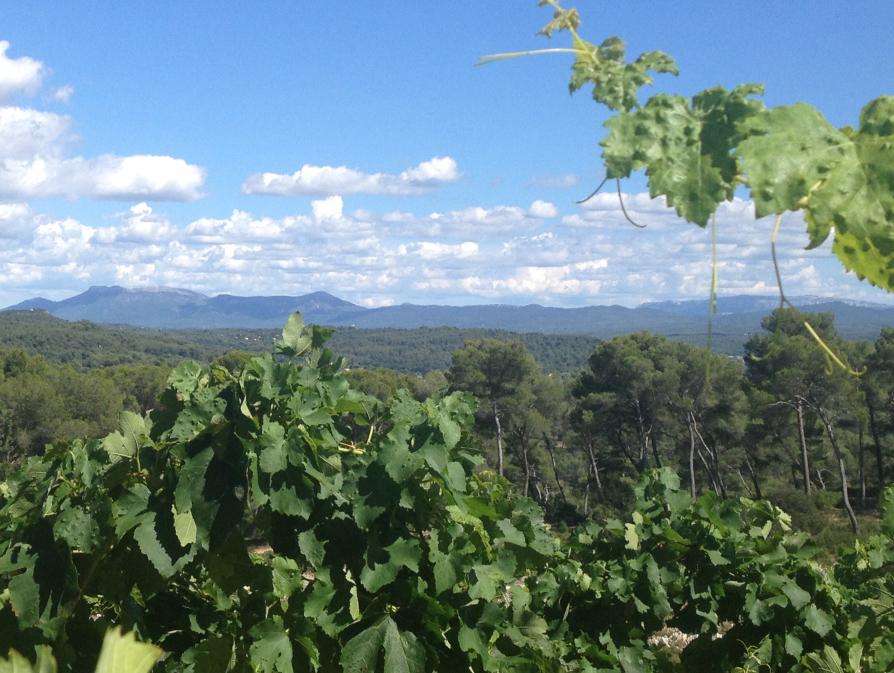 Paysan en Provence verte